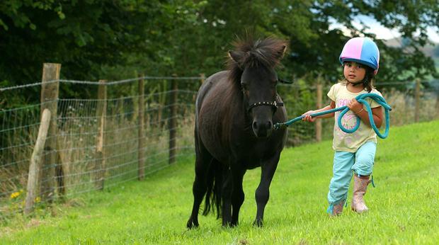 Comment assurer un cheval - Tchoupi et le cheval ...