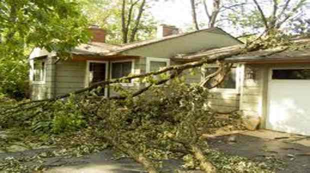 l 39 indemnisation en cas de chute d 39 un arbre sur une maison. Black Bedroom Furniture Sets. Home Design Ideas