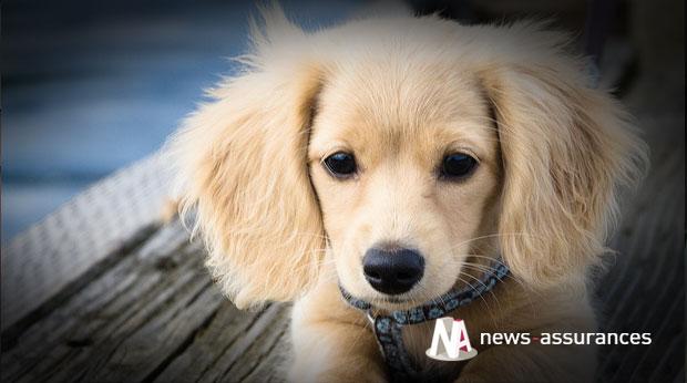 La rentrée, période propice au bilan de santé du chien