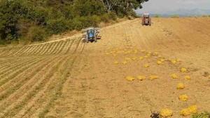 Secteur agricole / 2013 : Stabilisation des cotisations accidents de travail et maladies professionnelles, hausse du point retraite