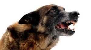 Morsures de chiens en France : Une enquête fait le point