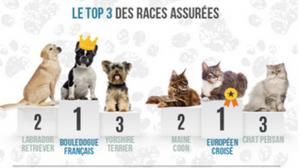 Santé : 4% des animaux de compagnies sont assurés en France