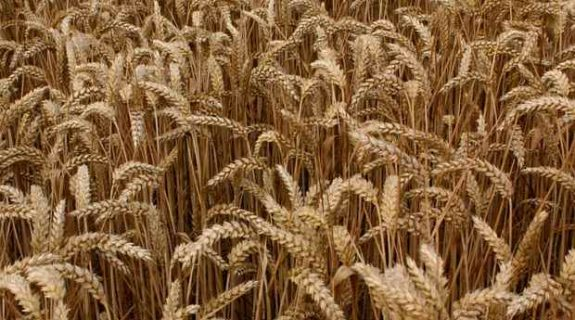 Qu'est-ce que la garantie sécheresse pour les récoltes ?