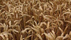 Groupama veut généraliser l'assurance agricole avec l'aide de l'Etat