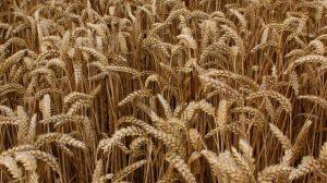 Grêle : La FDSEA va demander le classement en calamité agricole et attend des mesures du ministère