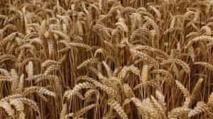 Les avancées légales en terme d'assurance pour les agriculteurs