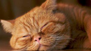 Assurance animaux : Chiens et chats vivent beaucoup plus longtemps