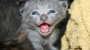 Assurance animaux : Perles, chiens et chats assurent !