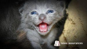 Santé animale : quelle couverture de soins recherchent les Français pour leurs animaux ?