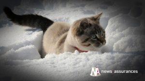 Santé animale : l'alimentation du chien en hiver