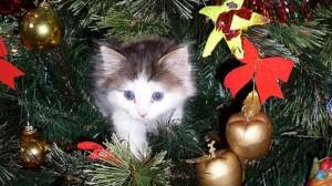 Assurance animale : Chien, chat et NAC, un sapin sans danger