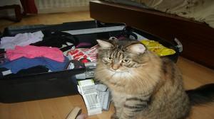 Assurance santé animale / responsabilité civile : chiens et chat en locations de vacances