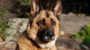 Assurance santé animale : les races de chiens que les Français préfèrent
