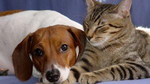 Assurance animale : Gare à la gastro-entérite
