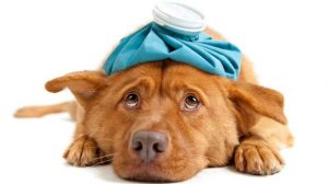 Assurance santé animale : rhumes et grippe chez le chien et chat