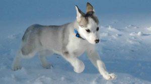 Assurance animale : Partir au ski avec son chien
