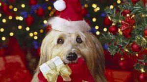 Assurance animaux : Chiens et chats, l'accès aux soins comme cadeau de Noël