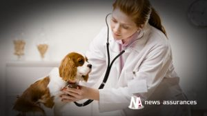 Assurance santé animale : la prise en charge des cas référés par les vétérinaires