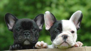 Assurance santé animale : Pourquoi prendre soin du chien ou du chat en automne ?