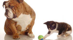 Assurance animale : Dangers domestiques, chiens et chats à l'abri des tentations