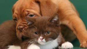Assurance animale : Les restrictions majeures à connaître