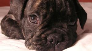 Assurance animaux : 5,6 % des maîtres suisses assurent leurs chiens et chats