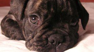Assurance santé animale : lutter conte les vers intestinaux du chien et du chat