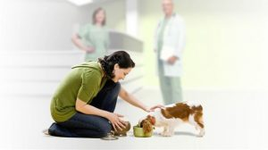 Assurance santé animale : Des antiparasitaires pour chiens dangereux pour les chats