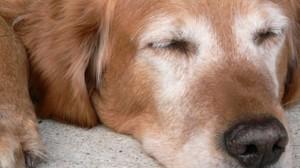 Assurance animale : Lutter contre l'arthrose chez le chien