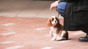 Assurance santé animale : Comment bien choisir son chien ou son chat en vue de l'assurer ?