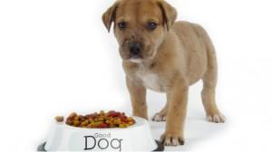 Assurance santé animale : Intoxications mortelles chez le chien dues à des croquettes