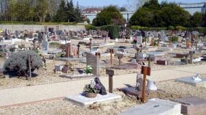 Assurance animaux : Obsèques des chiens et des chats, un adieu avec un coût parfois «aidé» par l'assurance