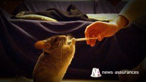 Santé animale : l'intérêt d'une mutuelle santé pour les rongeurs