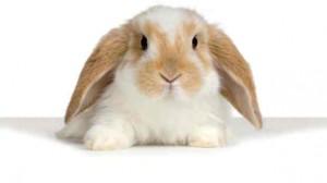 Assurance animale : Un lapin en bonne santé