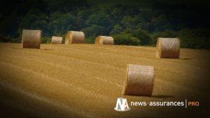 Assurance récolte : les agriculteurs recevront une subvention à hauteur de 65% des contrats de base