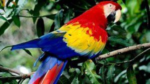 Vermifuges, les perroquets aussi