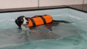 Bien-être animal : quelles précautions prendre pour se baigner avec son chien