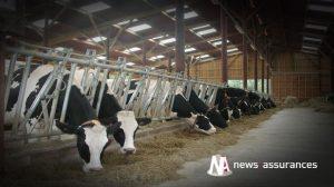 Élevage : la Mutualité sociale débloque 7,5 millions d'euros pour les éleveurs