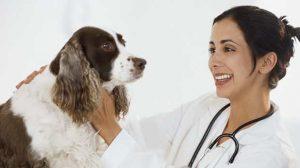 Assurance santé animale : Comment réagir en cas d'allergie de son animal ?