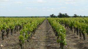 Comment sont assurées les vignes ?