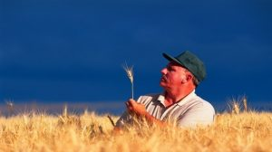Agriculture : Vers une assurance récolte universelle à moindre coût ?