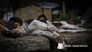 Santé animale : un accompagnement jusqu'en fin de vie