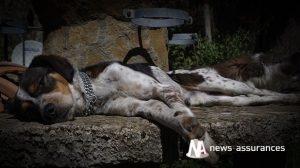 Assurance santé animale : protéger son chien de la chaleur