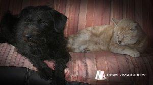 Assurance santé animale : sécuriser la maison au moment des fêtes