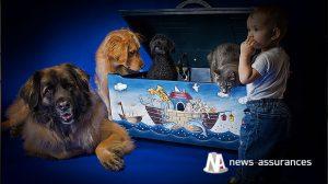 Santé animale : traitement des poux chez le chien, le chat et l'enfant, à chacun le sien !