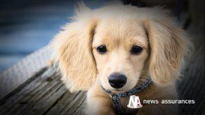 Santé animale : stress et anxiété chez le chien, des troubles qui se soignent
