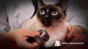 Assurance santé animale : bien aborder l'automne avec son chien et chat