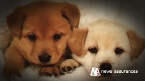 Assurance santé animale : la race détermine le mieux la prime