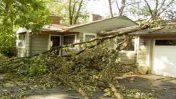 L'indemnisation en cas de chute d'un arbre sur une maison