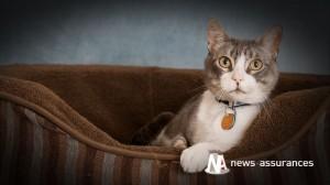 Santé animale : malpropreté chez le chat, trouble du comportement ou maladie ?